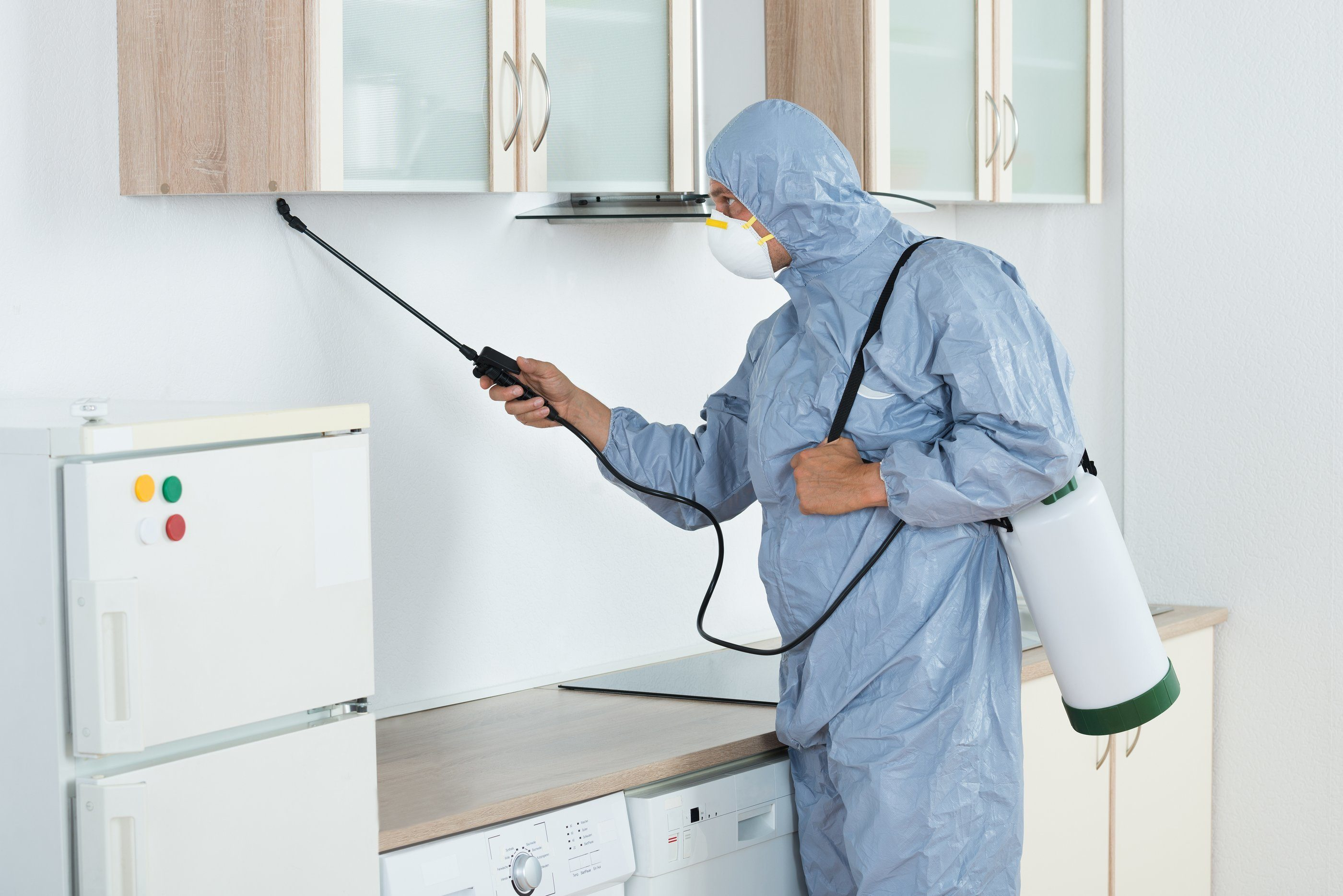 Bed Bugs Extermination - Coping With a Bed Bug Infestation