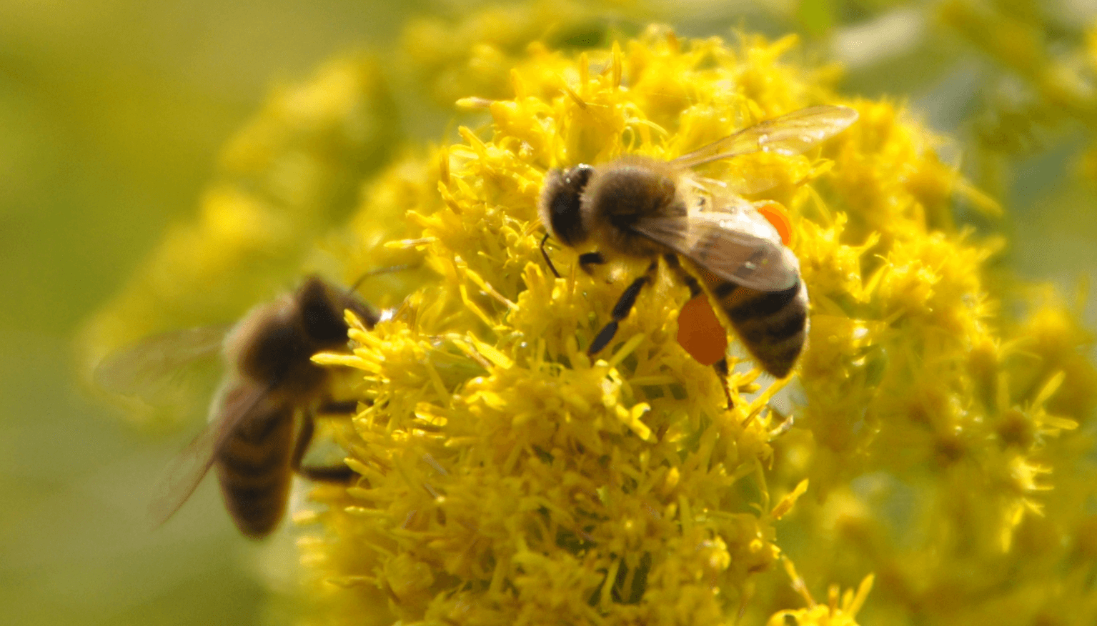 bee, wasp and hornet