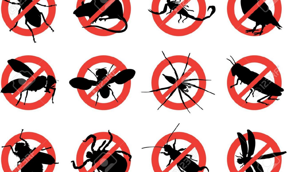 pest control tip in pest prevention