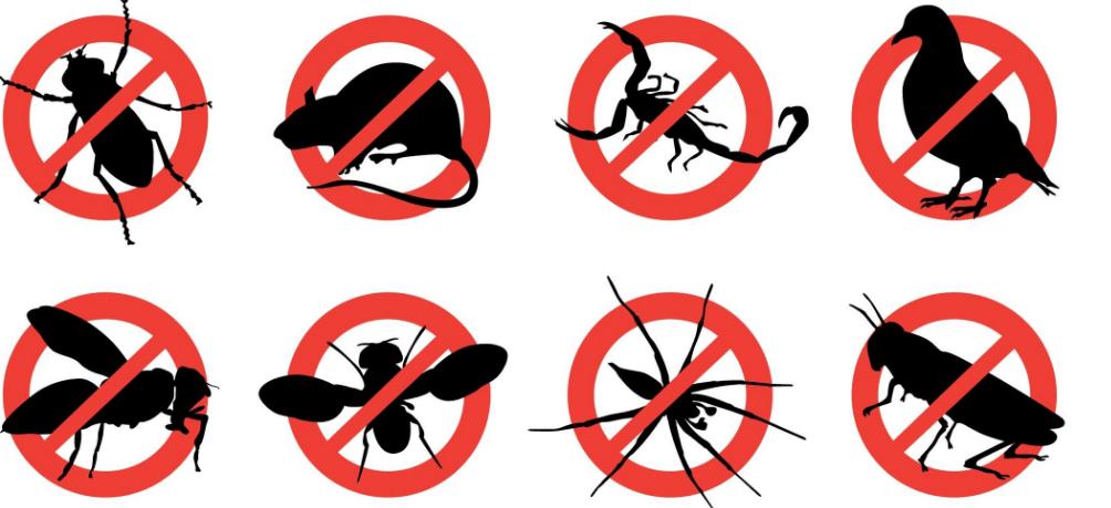 Pest Control Singapore