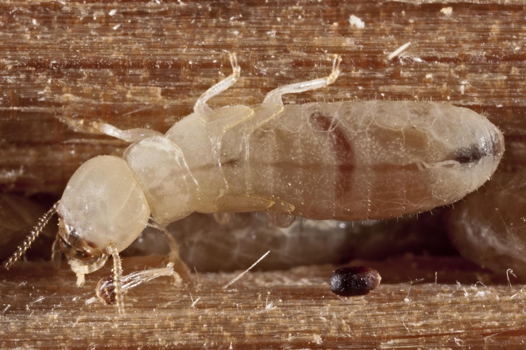 termite control tips